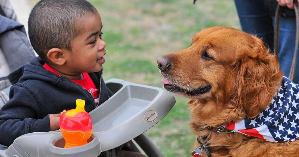 Animal-assisted intervention: a special therapy