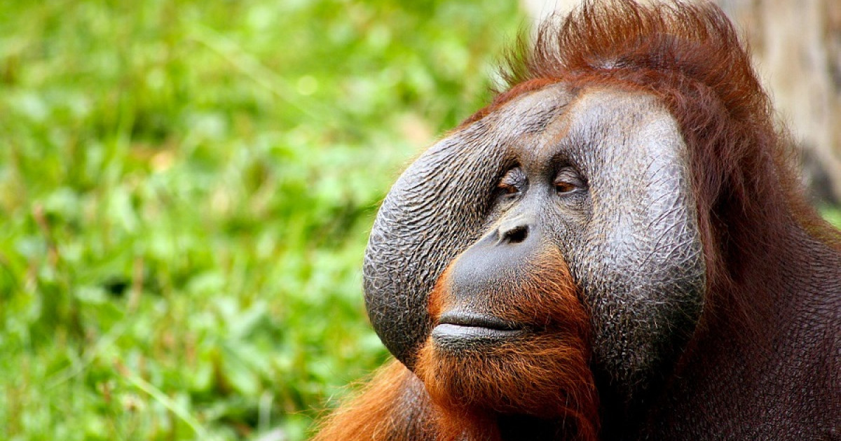 Animals that learned to use the tools: what do we know about them?