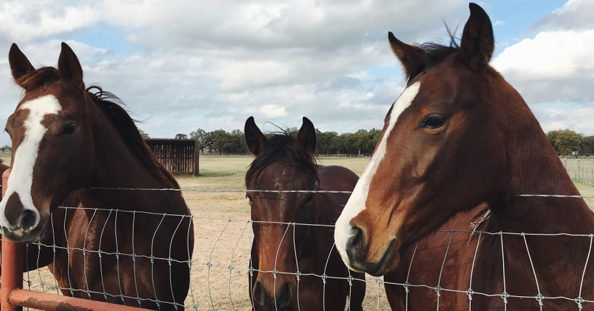 Equestrian therapy: an alternative therapeutic resource