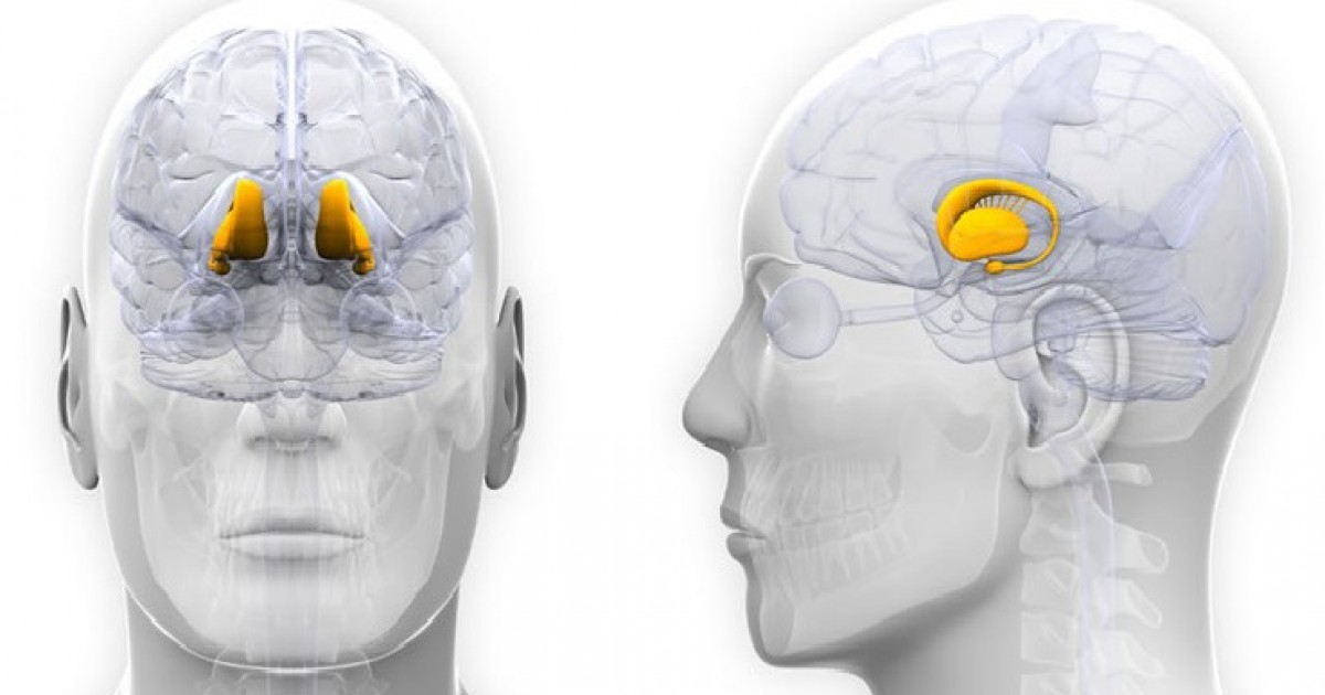 Hypothalamus: definition, characteristics and functions